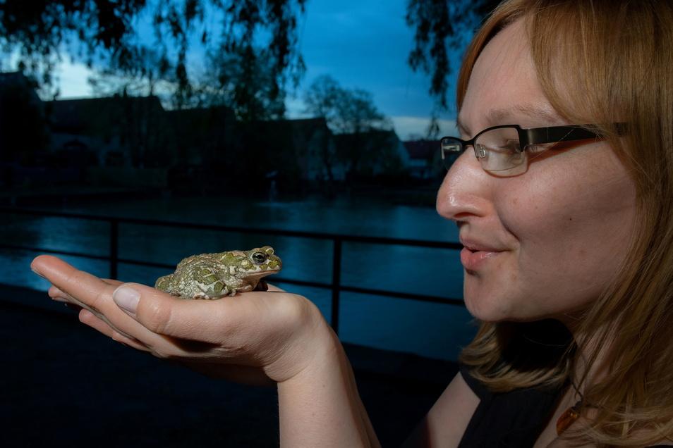 Schau mir in die Augen, Kleines: Kristin Pietzsch, seit sieben Jahren ehrenamtliche Naturschutzhelferin, spielt Taxi für eine Wechselkröte.