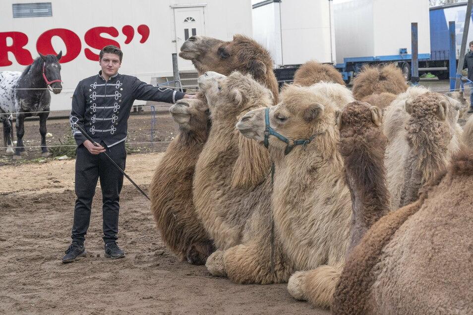 Marlon Schmidt bei der Kameldressur im Winterlager. Trotz Zwangspause muss regelmäßig trainiert werden.