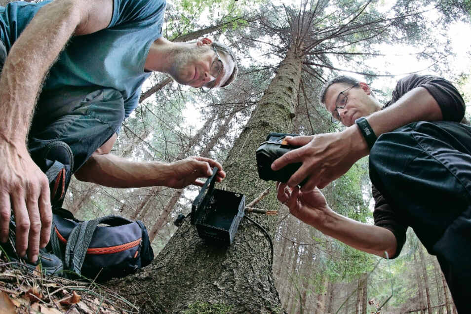 Lukáš Žák (links) und Paul Lippitsch überprüfen eine Fotofalle in einem Waldgebiet bei Cunewalde.