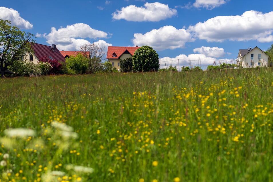 Die Wiese am Wiesenweg in Ottendorf: Hier sollen neue Eigenheime entstehen.