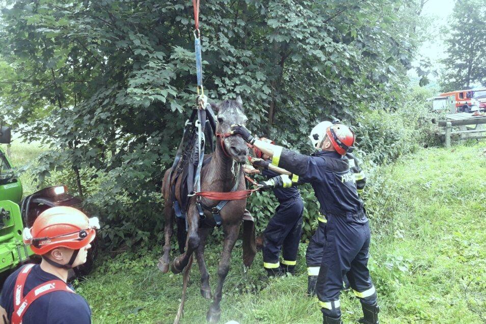 Kameraden haben das Pferd aus dem Schlamm gezogen.