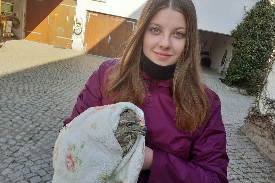 Wenn Tochter Marie einen verletzten Vogel findet: Am Wochenende hatte SZ-Redakteur Matthias Klaus deswegen einen ungeplanten Einsatz.