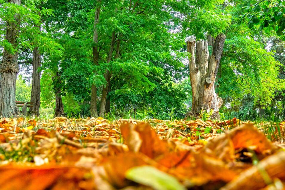 Der Park am Rittergut in Ziegra hat einen alten Baumbestand. Einige Bäume waren aber im Laufe der Jahre gefällt worden. Jetzt soll Ersatz her. Auch ein Fitnessgerät für Senioren soll im Park aufgestellt werden.