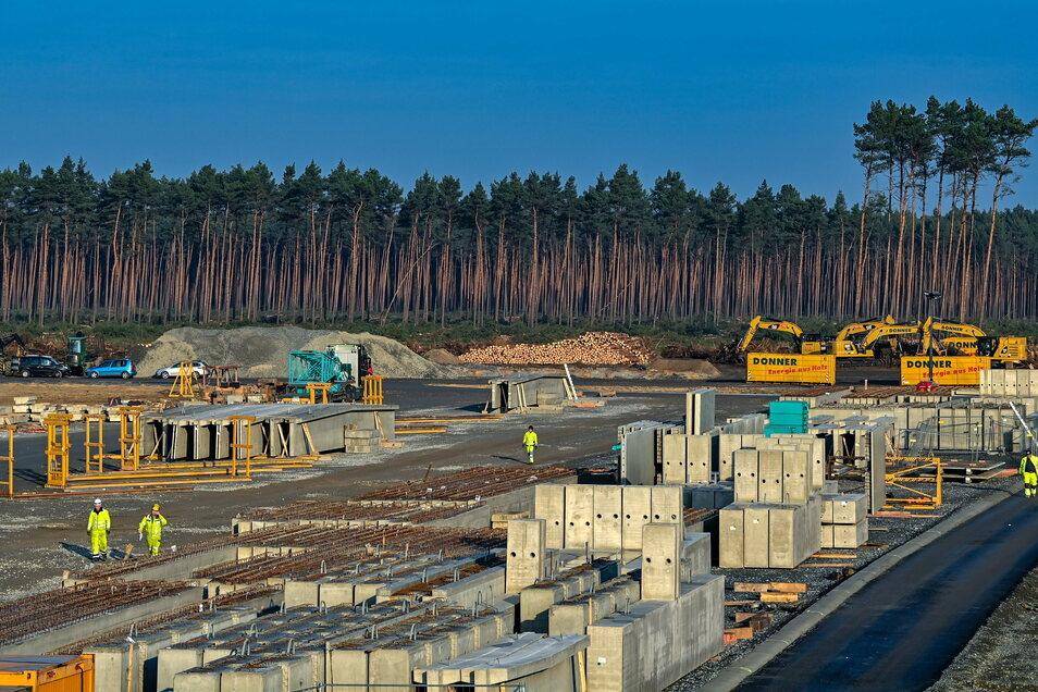 Gefällte Bäume liegen auf der Baustelle der Tesla Gigafactory. Gegen das Fällen wollen Umweltschützer trotz eines Urteils weiter vorgehen.