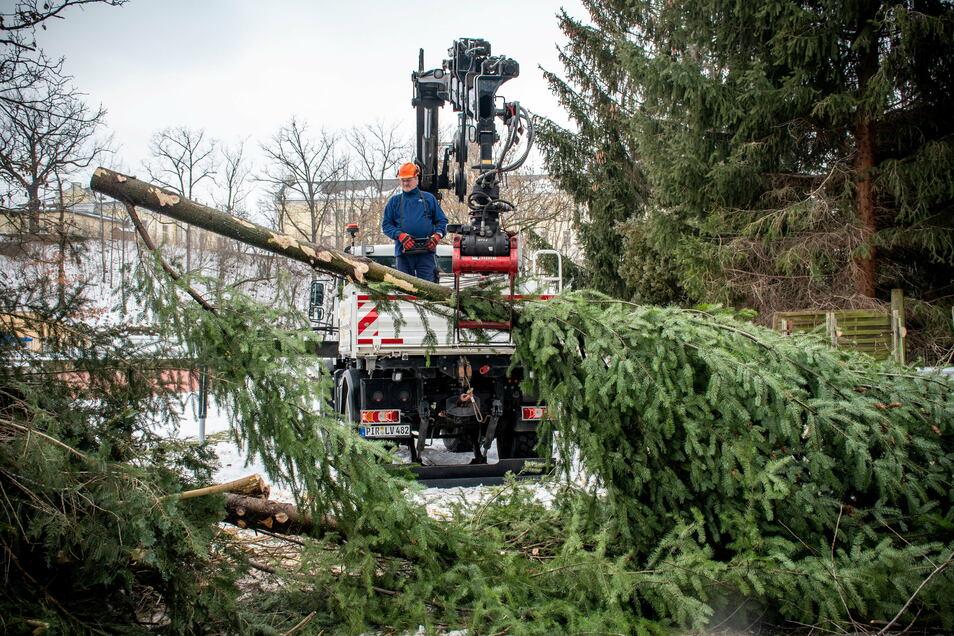 Etwa 50 Bäume werden gefällt, zehn weitere wahrscheinlich umgesetzt.