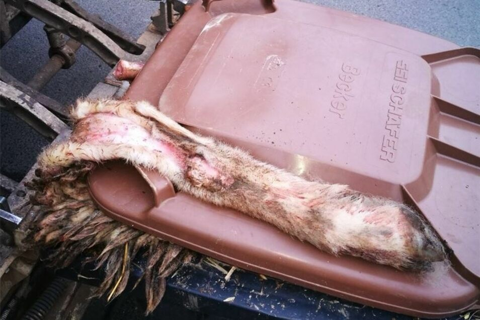 Auch Tierfelle fand man in der Biotonne.