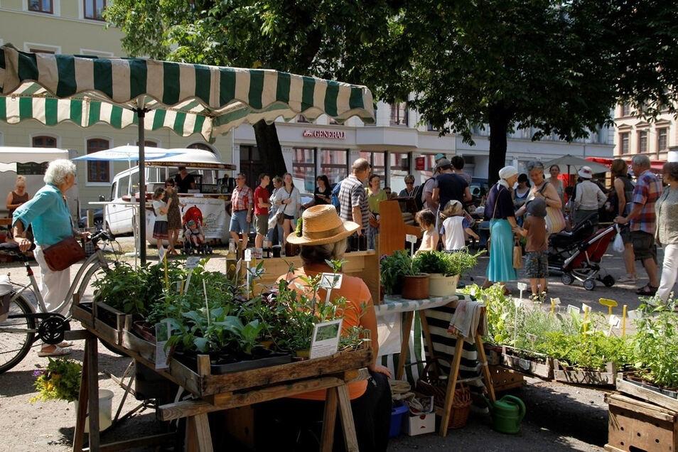 Die Görlitzer Naschallee gibt es am Sonnabend als Sommerausgabe. Start ist 16 Uhr auf dem unteren Teil der Elisabethstraße.