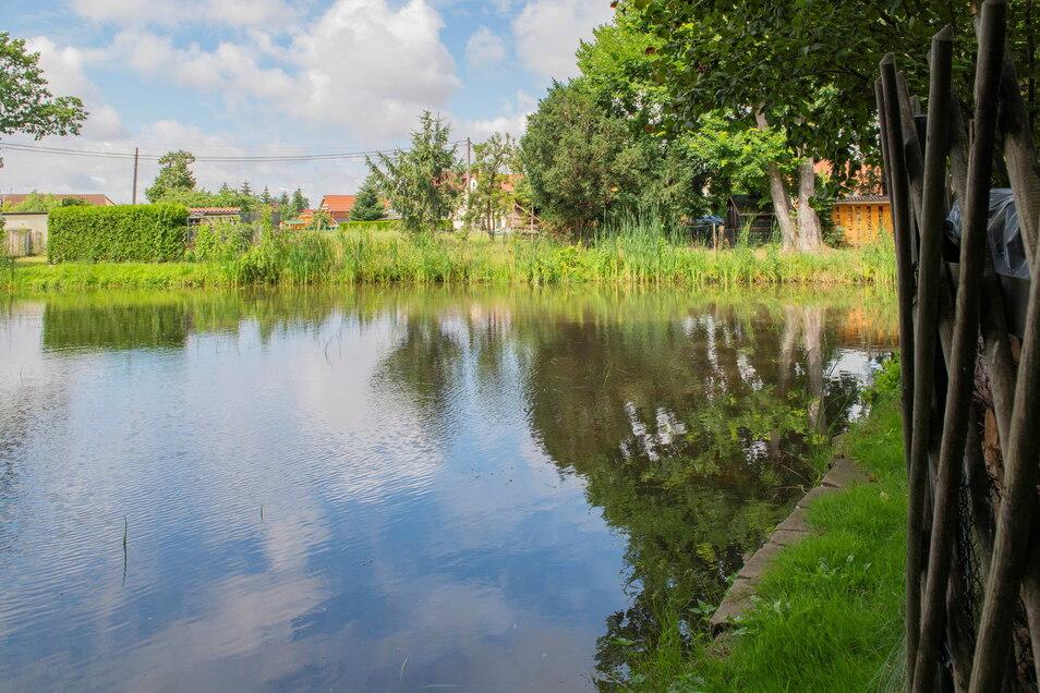 Der östliche Waldaer Dorfteich ist wieder ein sauberes Gewässer. Er wurde mit großem Aufwand entschlammt.