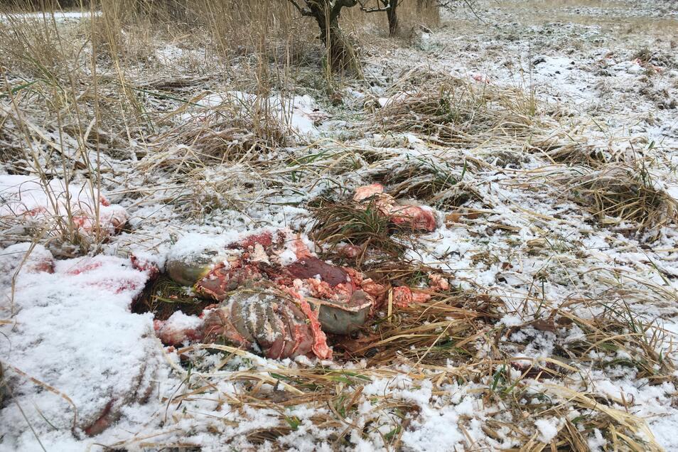 Haufen mit Eingeweiden wie dieser sind nicht das einzige, das Waldbesucher im früheren Ostritzer Klosterwald nach der Jagd vorfanden.