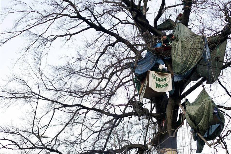Baum-Protest im Januar 2008  Am 15. Januar 2008 wurde unter großem Medieninteresse eine 280-jährige Rotbuche an der Ecke Bautzner Straße/Angelikastraße gefällt, die noch von dem durch Marcolini dort angelegten Englischen Park stammte. Der Baum war seit dem 12. Dezember 2007 von Aktivisten der Umweltschutzorganisation Robin Wood besetzt.