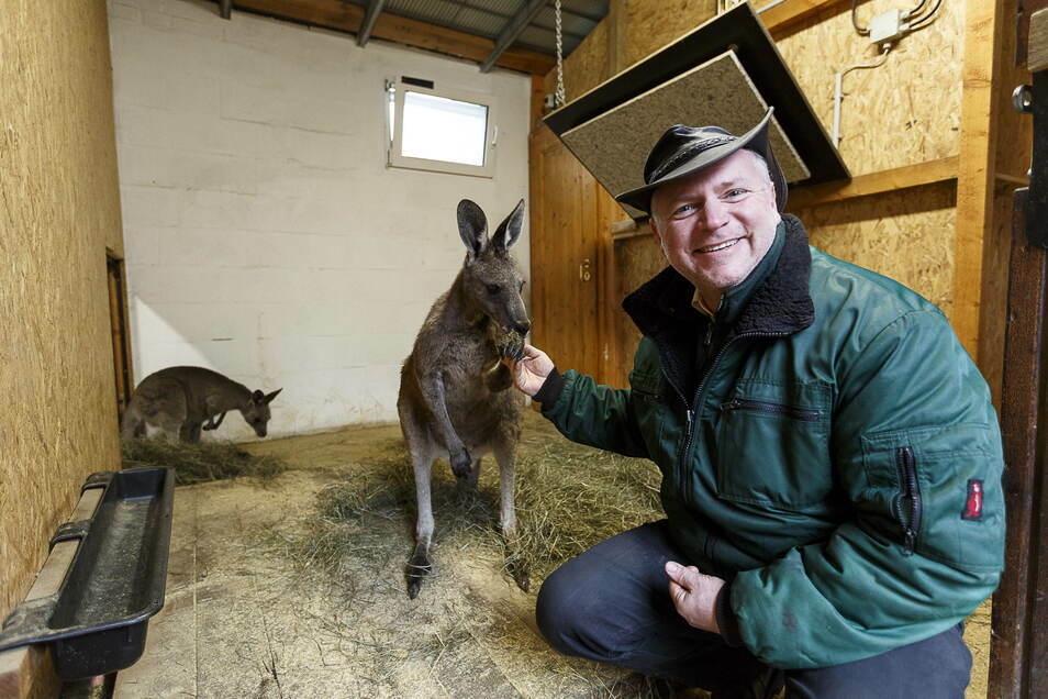Tierparkchef Sven Hammer mit einem Känguru: Ab Dienstag bliebt die Einrichtung geschlossen.