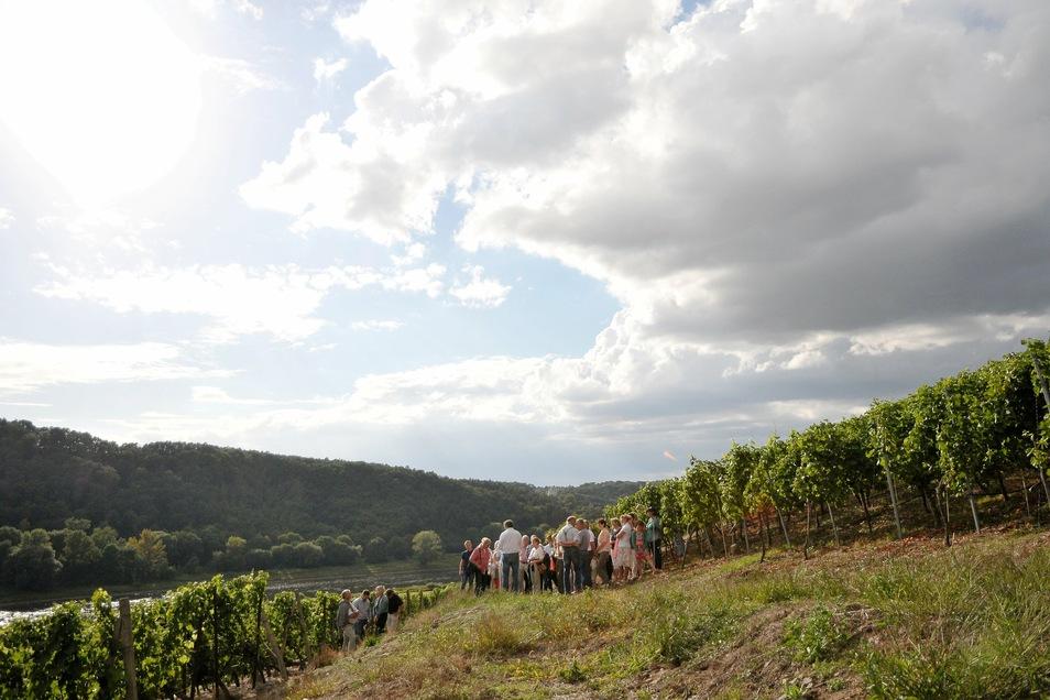 Wanderung im Weinberg