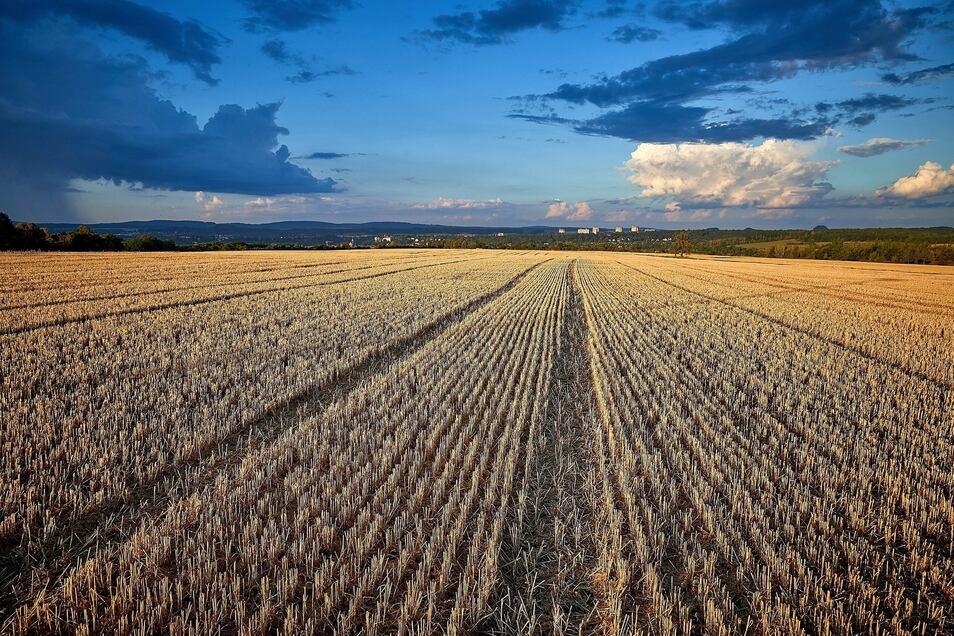 Einer der umstrittenen Fakten: Für den IPO soll Ackerland bebaut werden.
