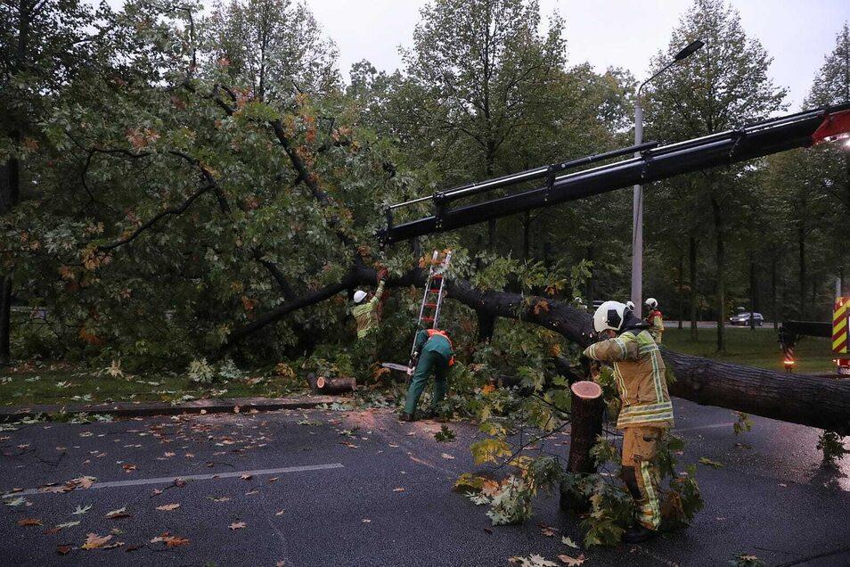 Die Feuerwehr zersägte den umgestürzten Baum.