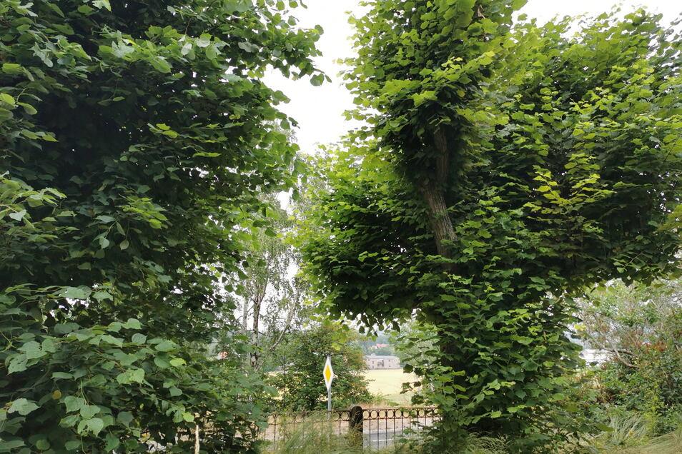 Die alten Linden vor der Tür geben von der Straße kaum noch den Blick aufs Gebäude frei.