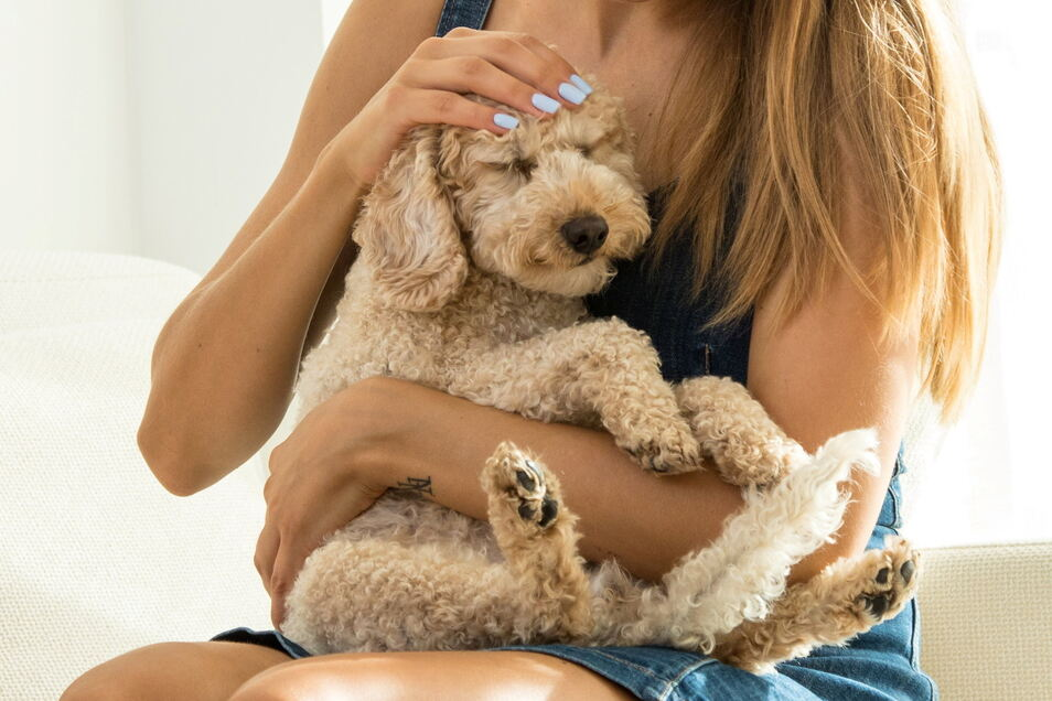 """""""Für viele verspricht ein Hund den Kontakt, den wir zwischenmenschlich vermissen"""", sagt Sozialwissenschaftlerin Sandra Wesenberg."""