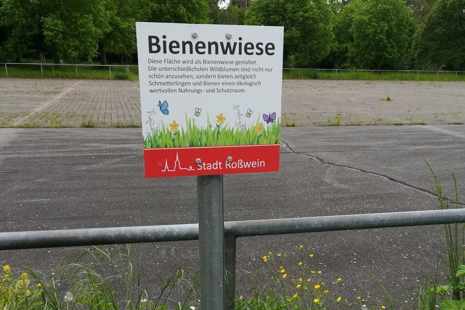 In Roßwein gibt es eine Insektenwiese jetzt an der Stadtbadstraße am Festgelände. Die hat das Bauhofteam schon im vergangenen Jahr angelegt. Die Tafeln sollen auch verdeutlichen: Nacholbedarf bei der Pflege gibt es da nicht.