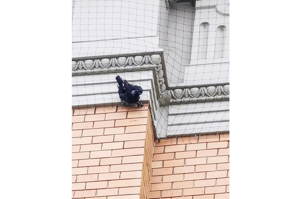 Bürger entdeckten diese Krähe in Not am Postplatz und riefen die Polizei.