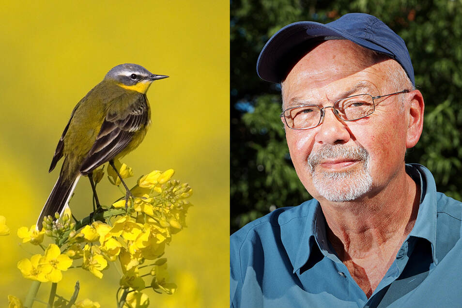Das große Artensterben in Riesas Vogelwelt ist bisher ausgeblieben, sagt Peter Kneis. Allerdings gilt ein großer Teil der heimischen Vögel als gefährdet.