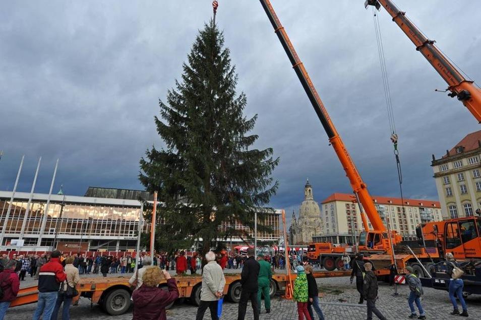 Eine etwa 40 Jahre alte Fichte steht in diesem Jahr als Weihnachtsschmuck im Mittelpunkt des Striezelmarkts. Der Baum wurde am Sonnabendmorgen auf einem Privatgrundstück in Langebrück gefällt.
