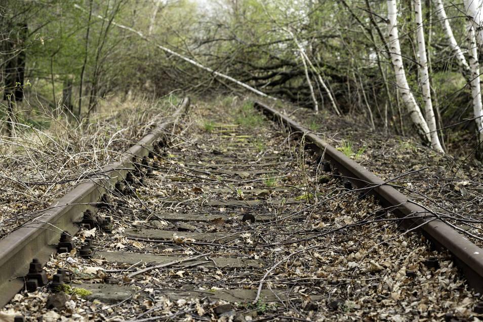 Kann diese Bahnstrecke zwischen Bautzen und Wilthen wiederbelebt werden? Die Chancen dafür sind eher gering. Derzeit liegen Äste und ganze Bäume über den Gleisen.