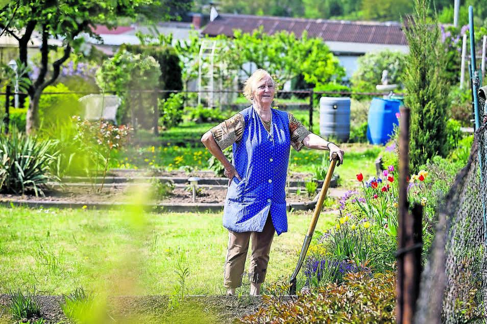 Rosel Slabon hat ihren Garten in Löbau und hilft auch im Kleingarten der Enkelin in Görlitz mit. Sie weiß, was Trockenheit für Blumen und Gemüse bedeutet.