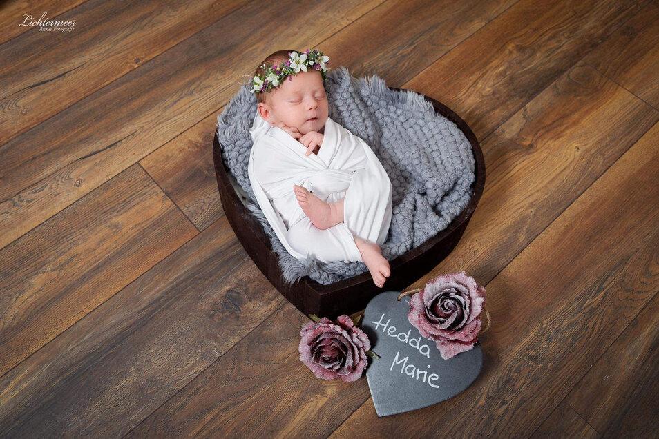 Hedda Marie, geboren am7. Mai, Geburtsort: Pirna, Gewicht: 3.255 Gramm, Größe: 50 Zentimeter, Mutter: Maria Währ, Wohnort: Heidenau
