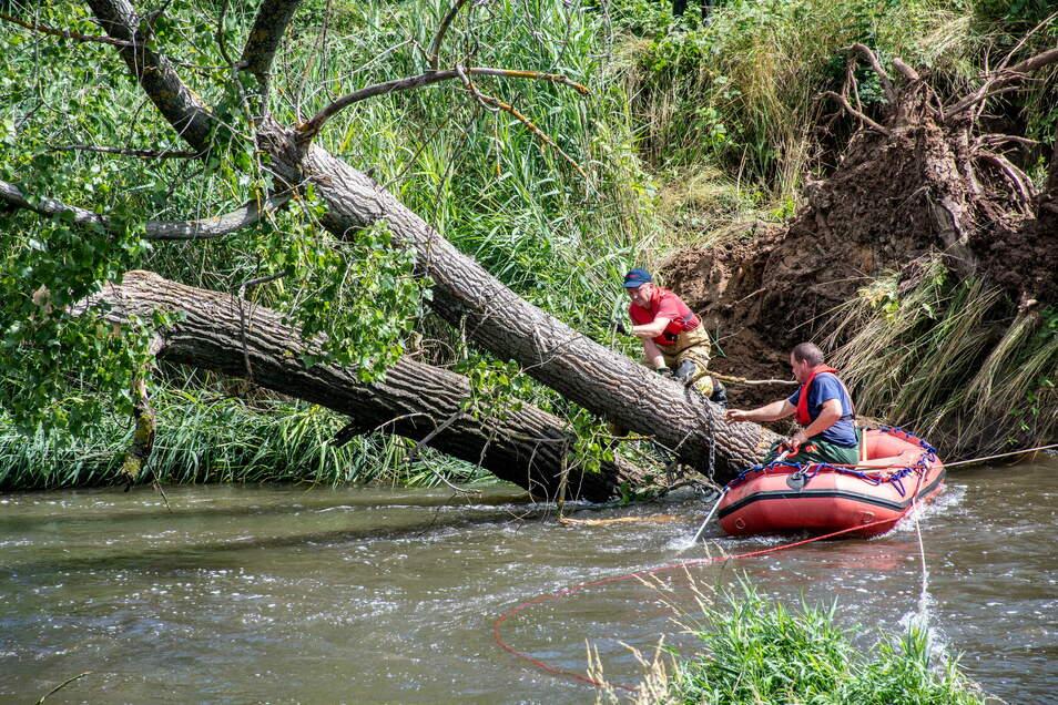 Kameraden der Roßweiner Feuerwehr befestigen ein Seil am Stamm der Pappel.