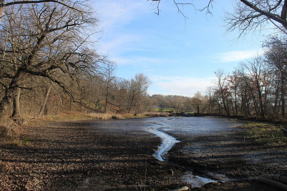 So sah der Alte See Ende Januar aus. Das Wasser war fast vollständig verschwunden. Alles war bereit für die trockene Entschlammung. Doch dann setzte Tauwetter ein und brachte neues Wasser über den Zschaitenbach.