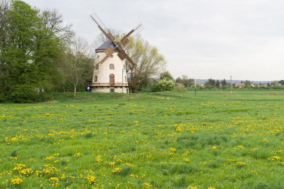 Unweit der Gohliser Mühle entstehen 200.000 Quadratmeter für vertriebene Tiere und Pflanzen.