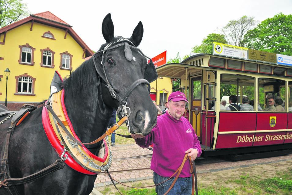 Kutscher Mario Lommatzsch steht mit Pferd Elko vor dem Pferdebahnmuseum.