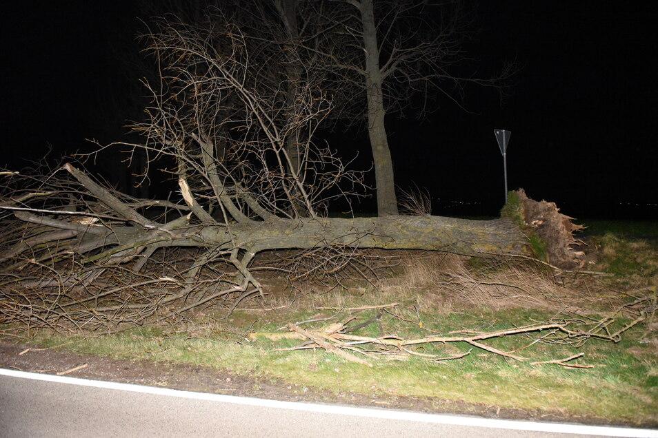 Erste Vorboten des Sturmtiefs erreichten die Region. Vereinzelte Bäume hielten den Böen nicht stand und landeten auf den Straßen.