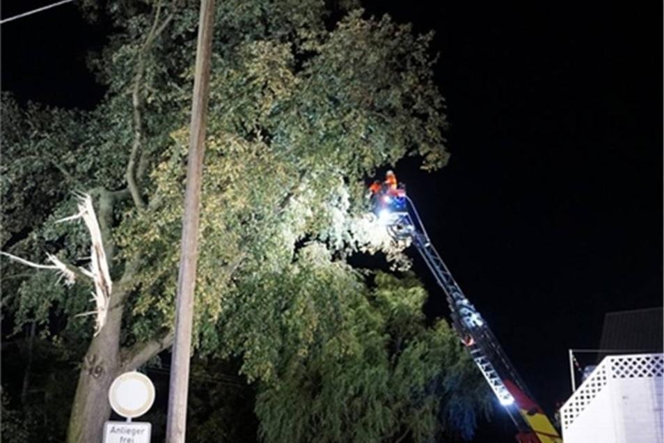 Bei einem großen Baum in Dahlowitz brach ein dicker Ast ab.