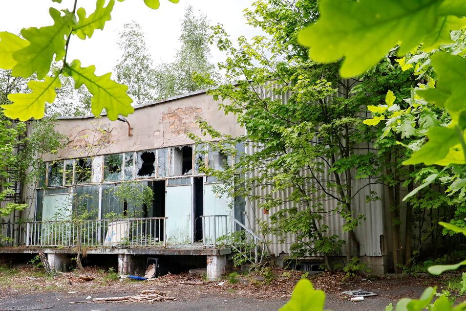 Die ehemalige Schwimmhalle in Löbau ist in einem maroden Zustand.