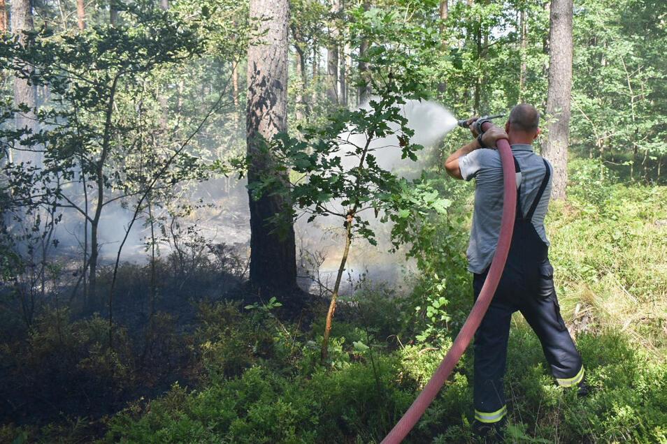 Schon zum sechsten Mal müssen Feuerwehrleute zu einem Waldbrand in Olbersdorf ausrücken.
