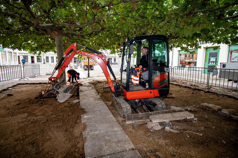 Der Döbelner Bauhof hat Pflaster und Wegeplatten unter den Platanen auf dem Niedermarkt und damit auch Stolperfallen entfernt. In den kommenden Tagen wird stattdessen eine Wegedecke eingebaut, an der die Bäume keinen Schaden anrichten können.