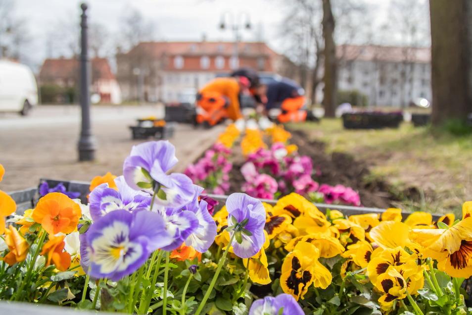 Die Mitarbeiter des Bauhofes verschönern den Zinzendorfplatz mit der Frühjahrsbepflanzung. Zwei Tage haben sie damit zu tun.