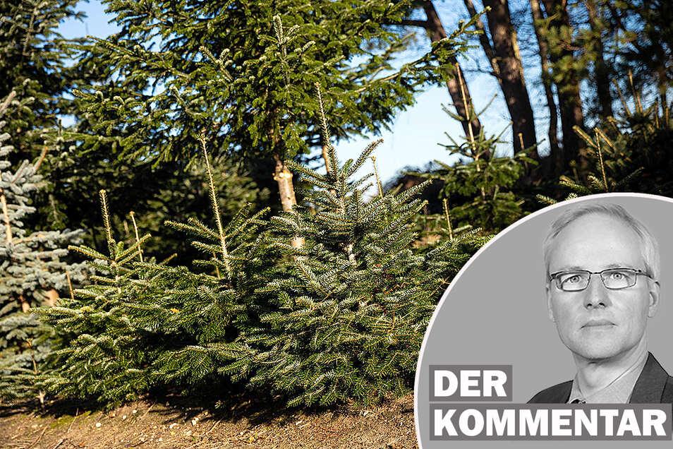 Sachsen braucht einen vielfältigeren Wald - neu ist die Erkenntnis jedoch nicht.