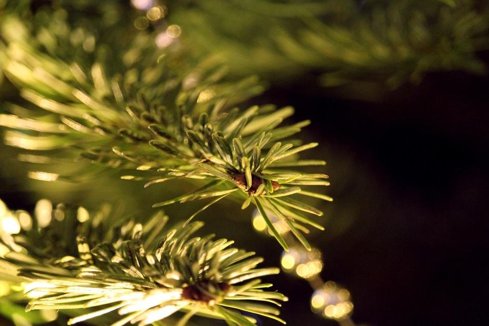 Für die Entsorgung der Weihnachtsbäume schaffen die Abfallzweckverbände der Städte eine einfache Lösung.