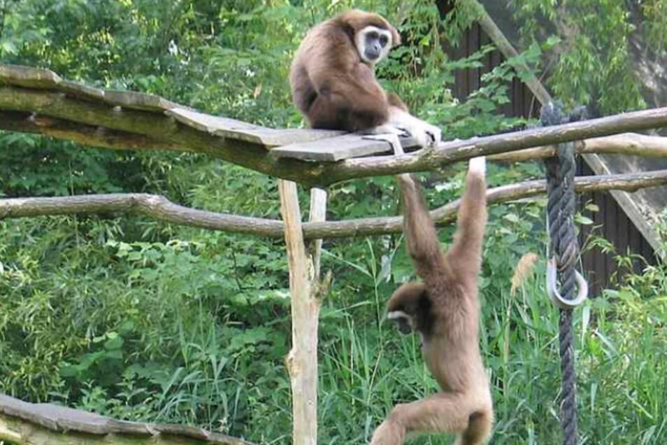 Mit einem Ausflug an die frische Luft - wie zum Beispiel in einen Tierpark - kann man nicht viel falsch machen.