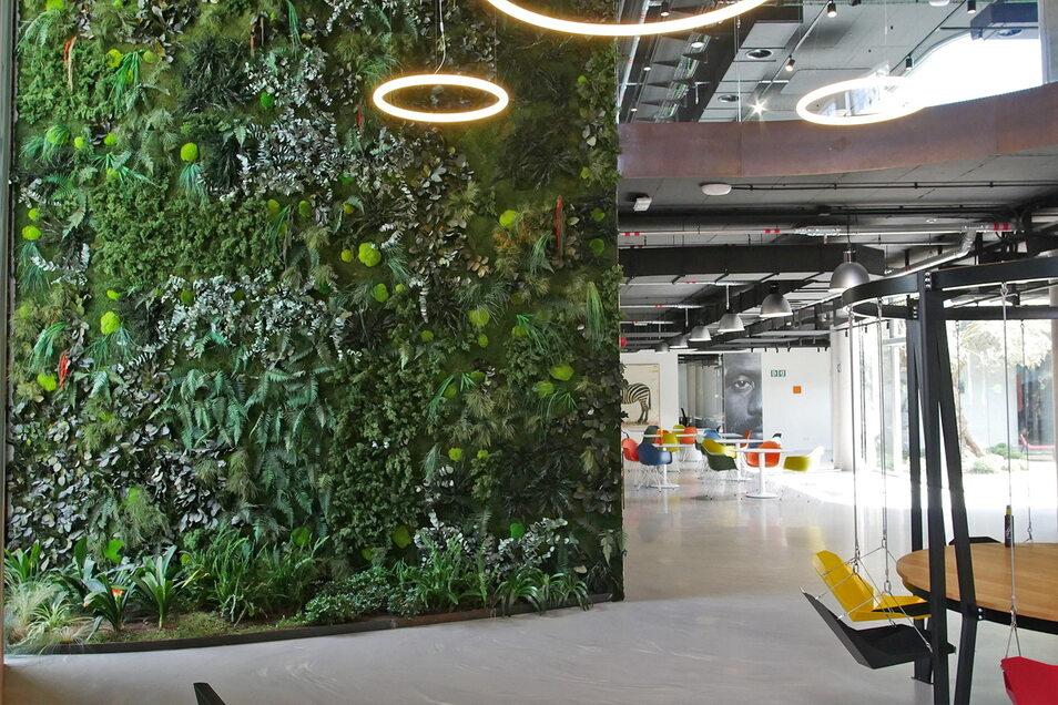 In einem modernen Bürohaus auf Mallorca hat die Firma Moos Moos Wände gestaltet.
