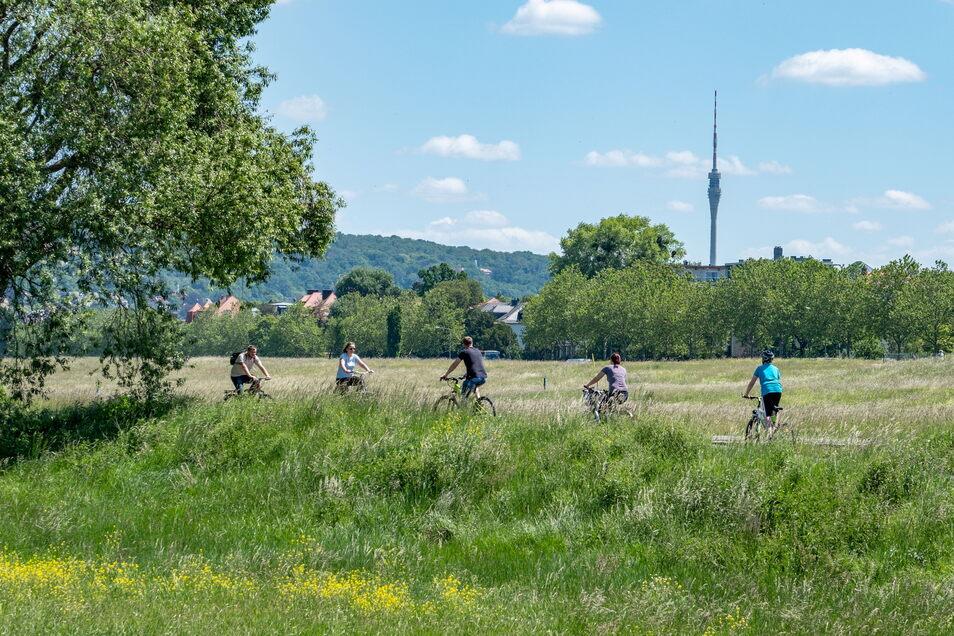 Radfahrer auf dem Elberadweg in Dresden: Corona hat für einen Zweirad-Boom gesorgt.