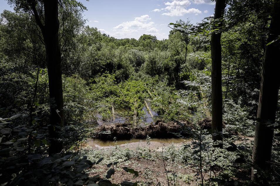 Das Bild wird man wahrscheinlich noch länger sehen: Bäume, die in einem Sumpfgebiet nahe der Weinlache ins Wasser gestürzt sind. Sie werden voraussichtlich liegen bleiben.
