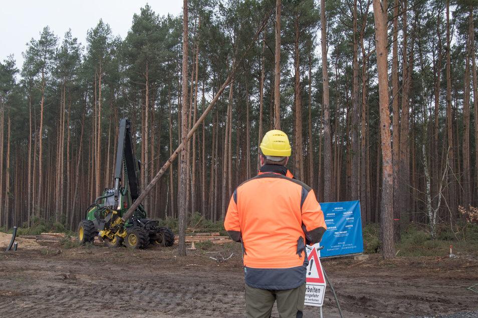 Der US-Elektroautobauer Tesla lässt für sein neues Werk in Grünheide den Wald roden.