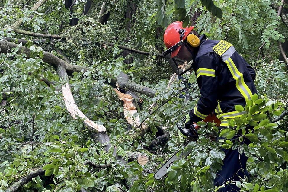 Feuerwehr im Einsatz: Nach einem kräftigen Gewitter mit Starkregen sind in Görlitz an der Landskron Brauerei bei der Parkeisenbahn mehrere Bäume umgeknickt.