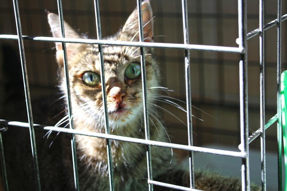 Diese nur ein Kilogramm leichte Katze wurde auf der Großenhainer Poststraße gefunden.