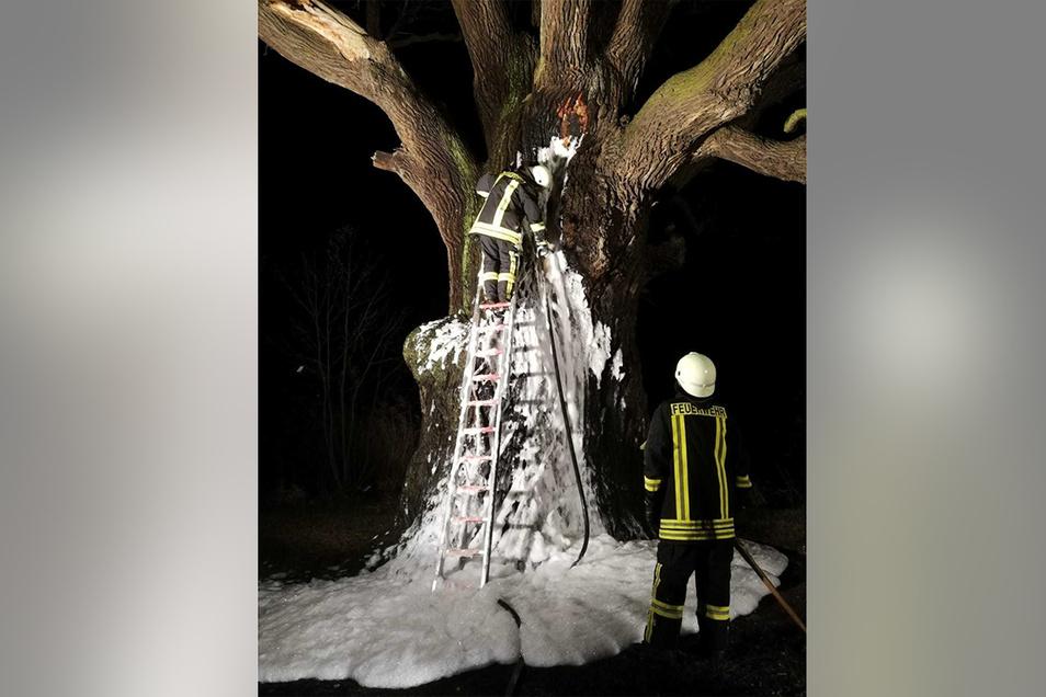 Zweimal mussten Feuerwehrleute im Dezember zur Rieseneiche ausrücken. Rund ein Drittel der schützenden Borke ist bei den beiden Bränden zerstört worden.