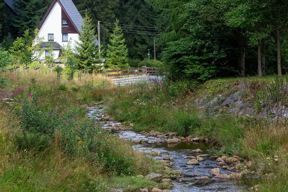 Jetzt in Trockenzeiten ist die Weißeritz in Waldbärenburg ein sanftes Bächlein. Sie kann aber auch ganz anders. Daher ist an ihrem Oberlauf ein weiteres Hochwasserrückhaltebecken geplant.