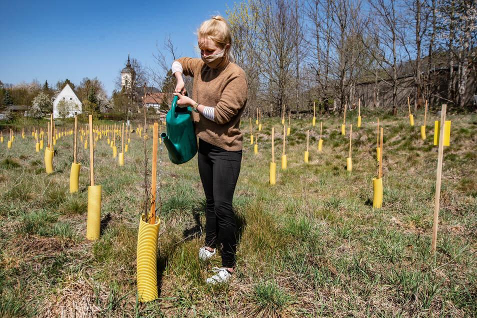 Gymnasiastin Emilia Börno gießt die neuen Pflänzchen mit Wasser bei warmen Frühlingstemperaturen.