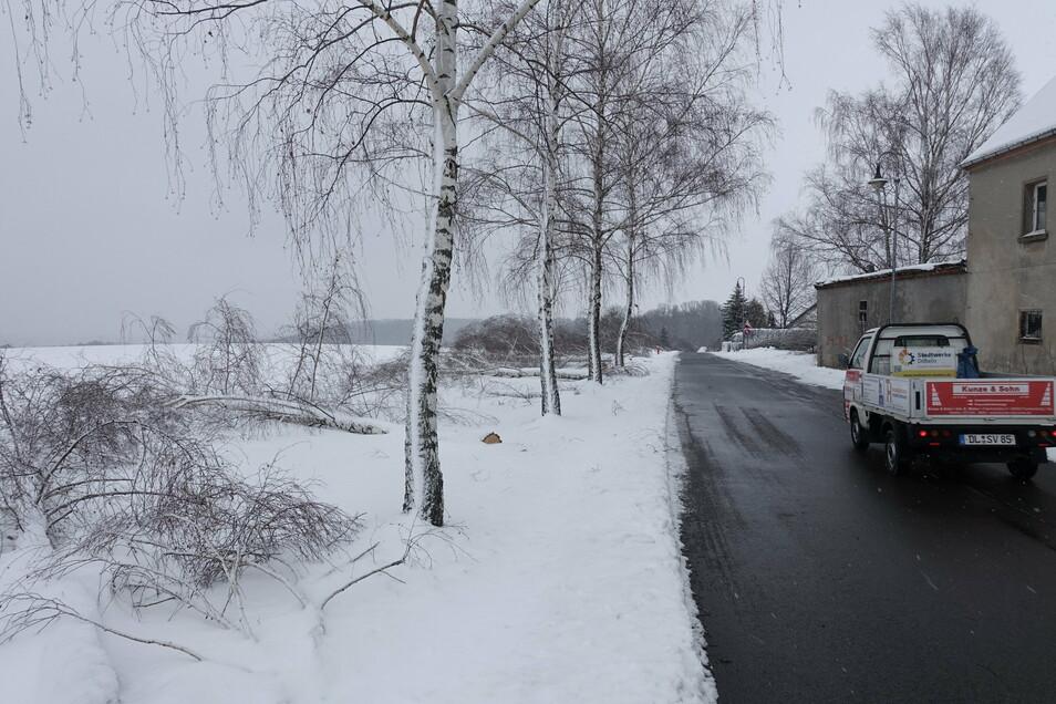 Am Bärental in Döbeln waren etwa 30 Birken durch die Last so schwer beschädigt, dass der Bauhof der Stadt gleich final die Säge angesetzt hat. Weniger beschädigte Bäume wurden stehengelassen.